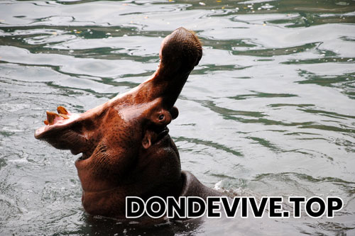 ¿Donde vive el hipopotamo?