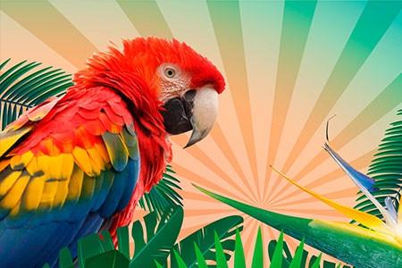 Aves bellísimas